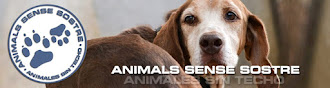 VISITA NUESTRA WEB PROTECTORA ANIMALS SENSE SOSTRE