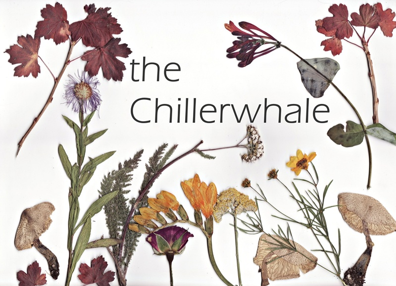 the chillerwhale