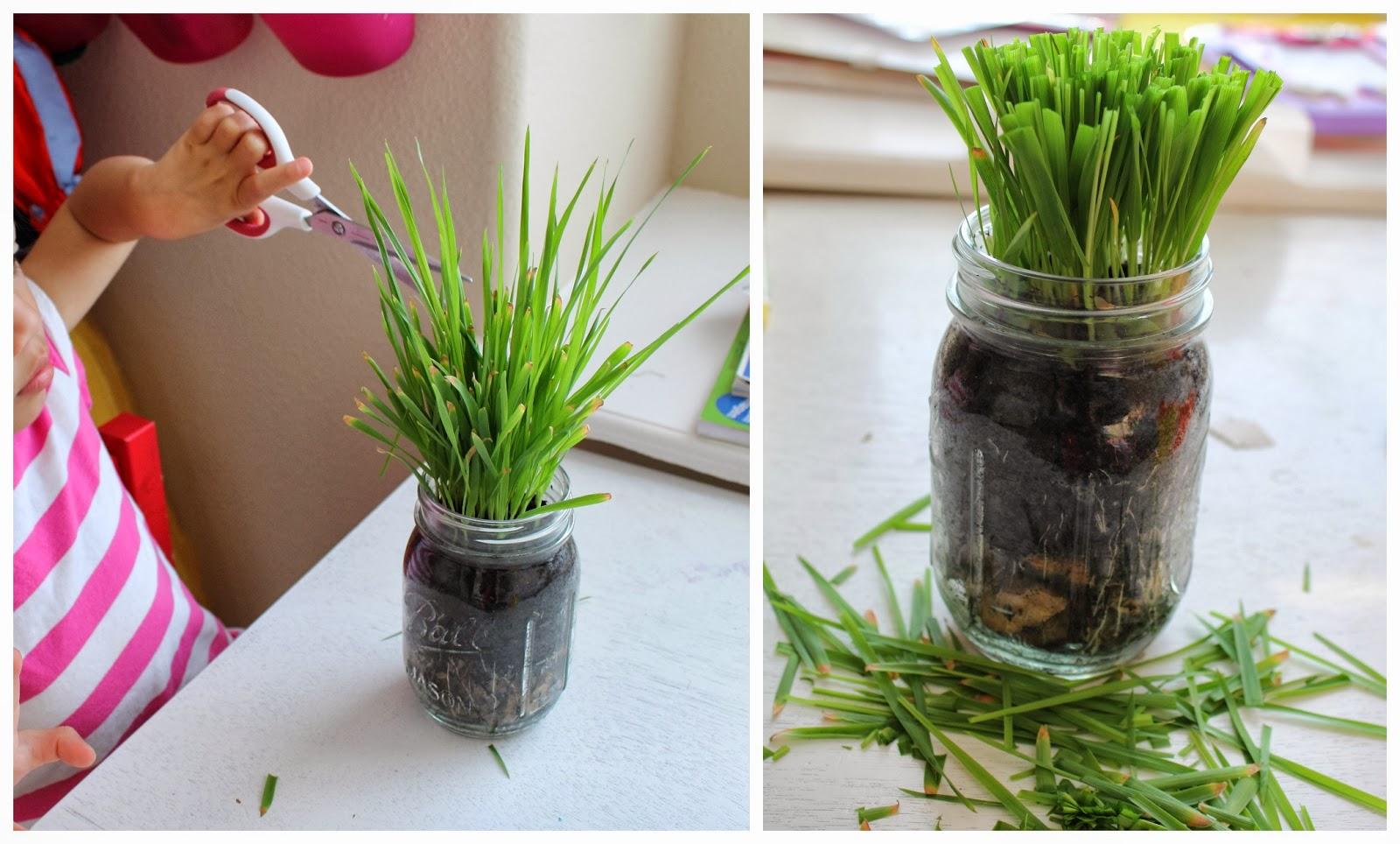 minecraft how to make grass grow