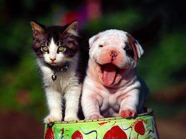 #31 Cute Animal Wallpaper