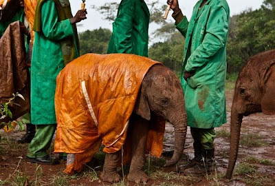 Kenya's Baby Elephant Orphanage Seen On www.coolpicturegallery.us