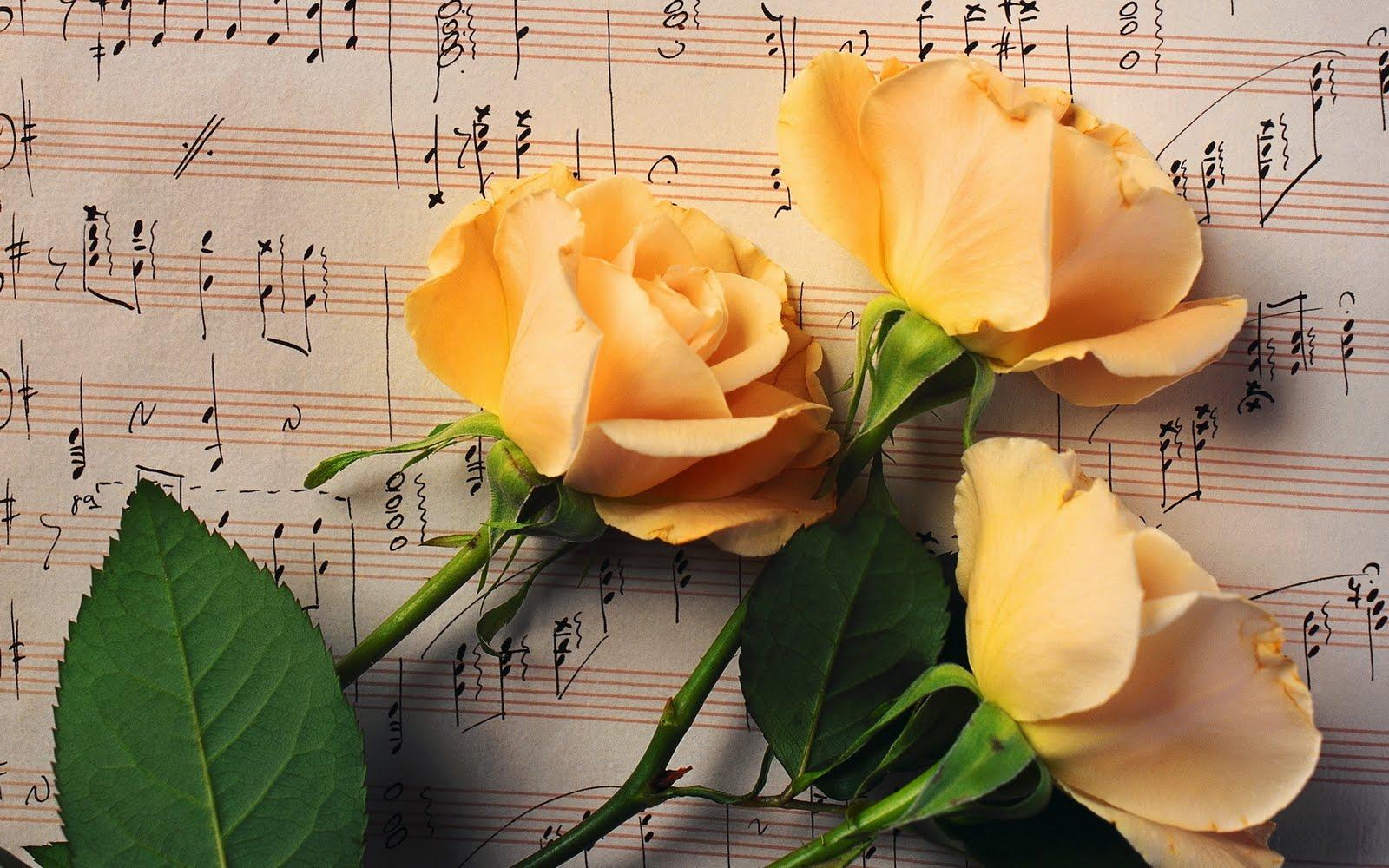 Fotos de Orquideas Rosas y Tulipanes Altisima definicion