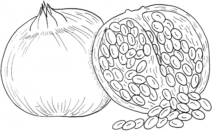 stone fruits coloring pages pictures - Fruit Coloring Pages 2