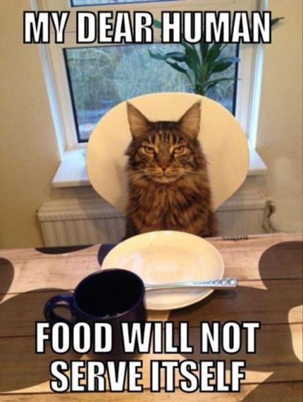 Funny Memes For Food : Funny animal captions part pics amazing