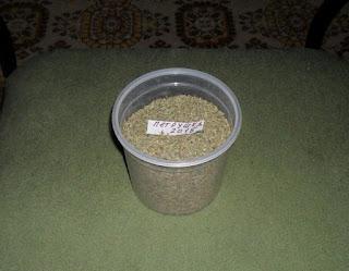 20.10. Заготавливаю семена петрушки.