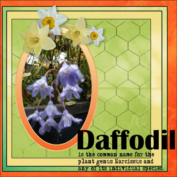 March 2018-Dafofodils