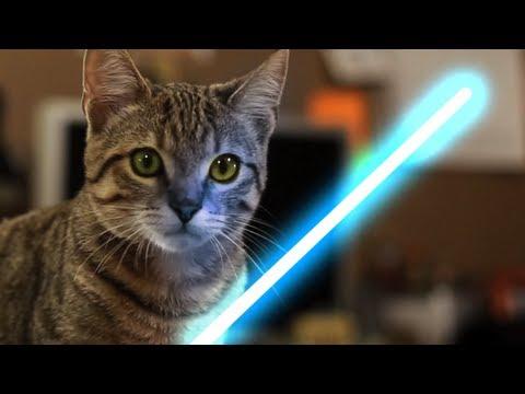 Chaton Jedi avec la Force