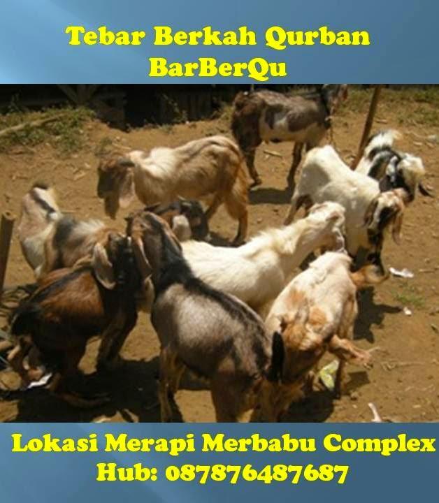BarBerQu: Tebar Berkah Qurban