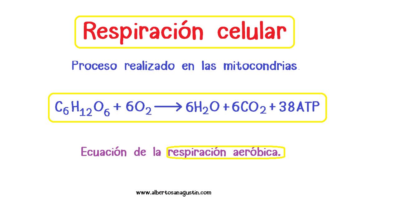 fórmula de la respiración celular