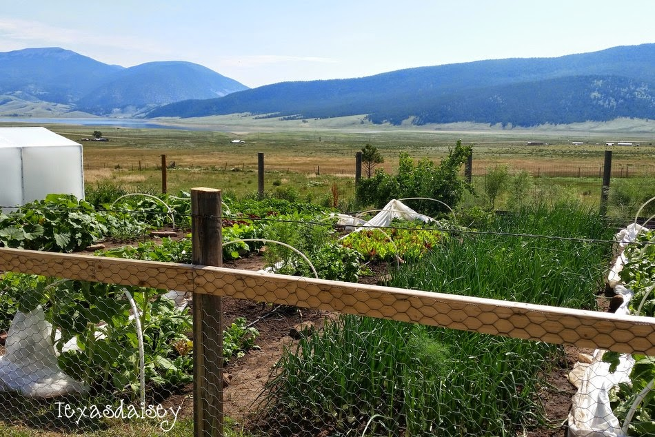 View of vegetable garden on Angel Fire Garden Tour