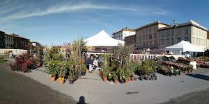 Fiori a Pisa (foto ap)
