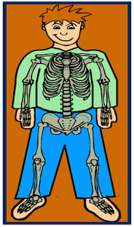 http://www.sheppardsoftware.com/health/anatomy/skeleton/Skeleton_game_1.htm