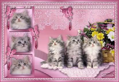 tarjetas de tiernos gatitos