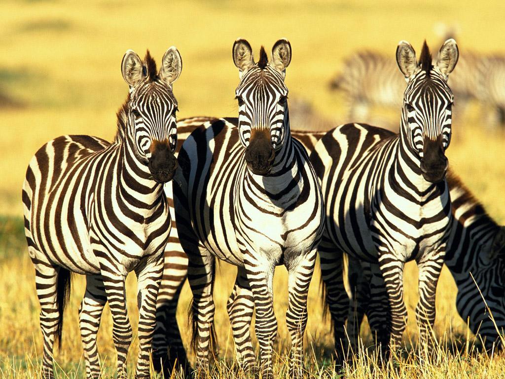 African Animals | Wildlife Photos