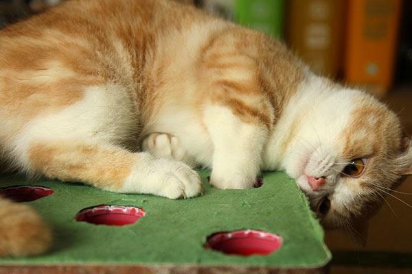 mean eyed cat austin