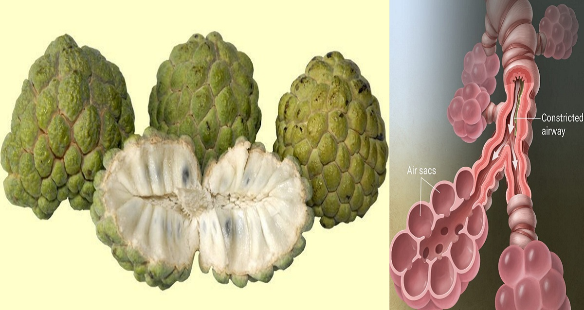 Eat ATIS (Sugar Apple) Everyday to Fight Asthma, Hypertension ...