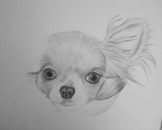 étapes dessin chihuahua