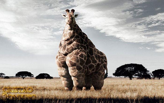 mcdonalds e Giraffas