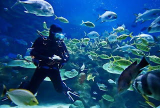 Teknik Diving Atau Menyelam Yang Benar