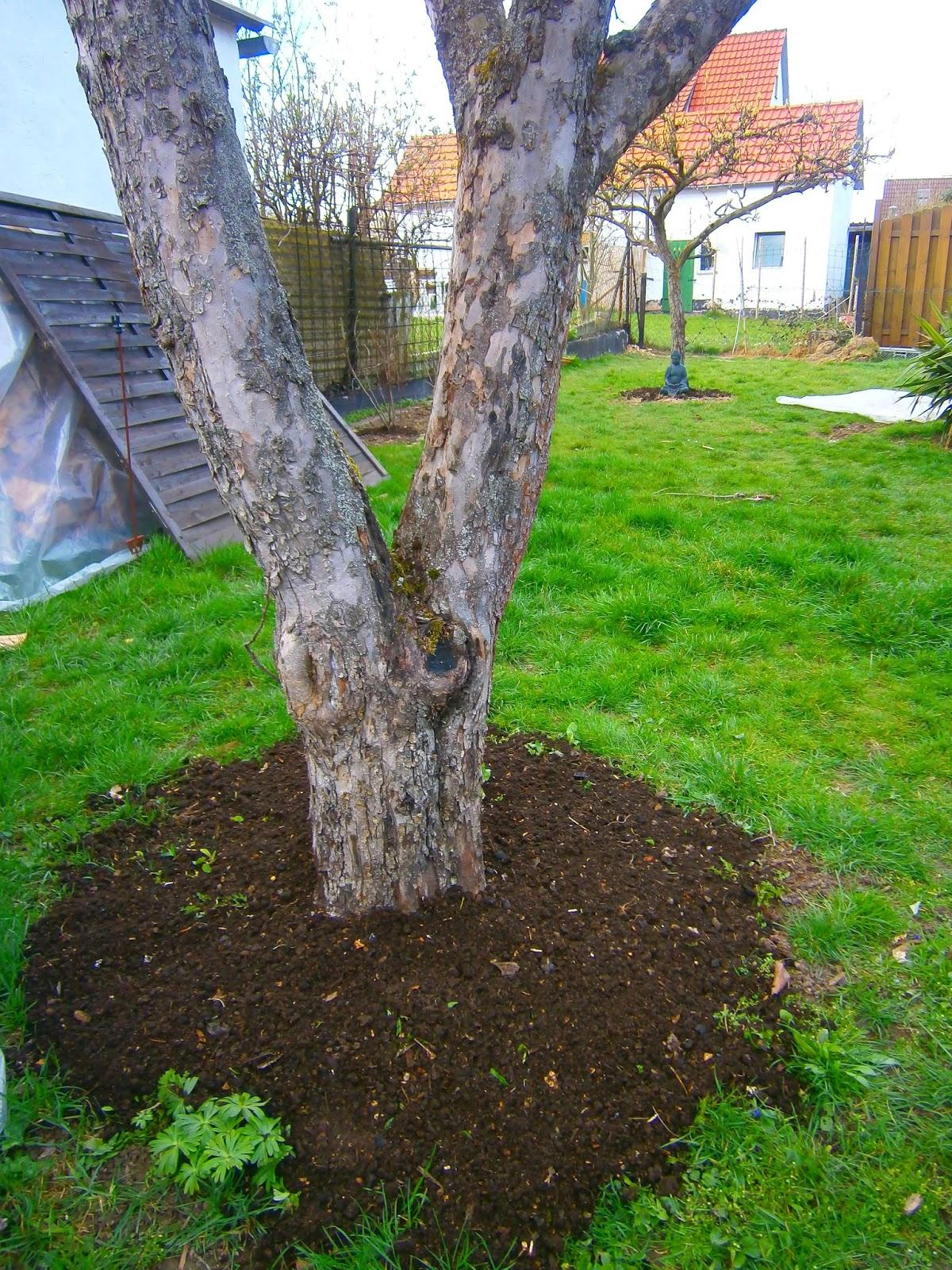 selbstversorgung für faulpelze?: kompost für bäume