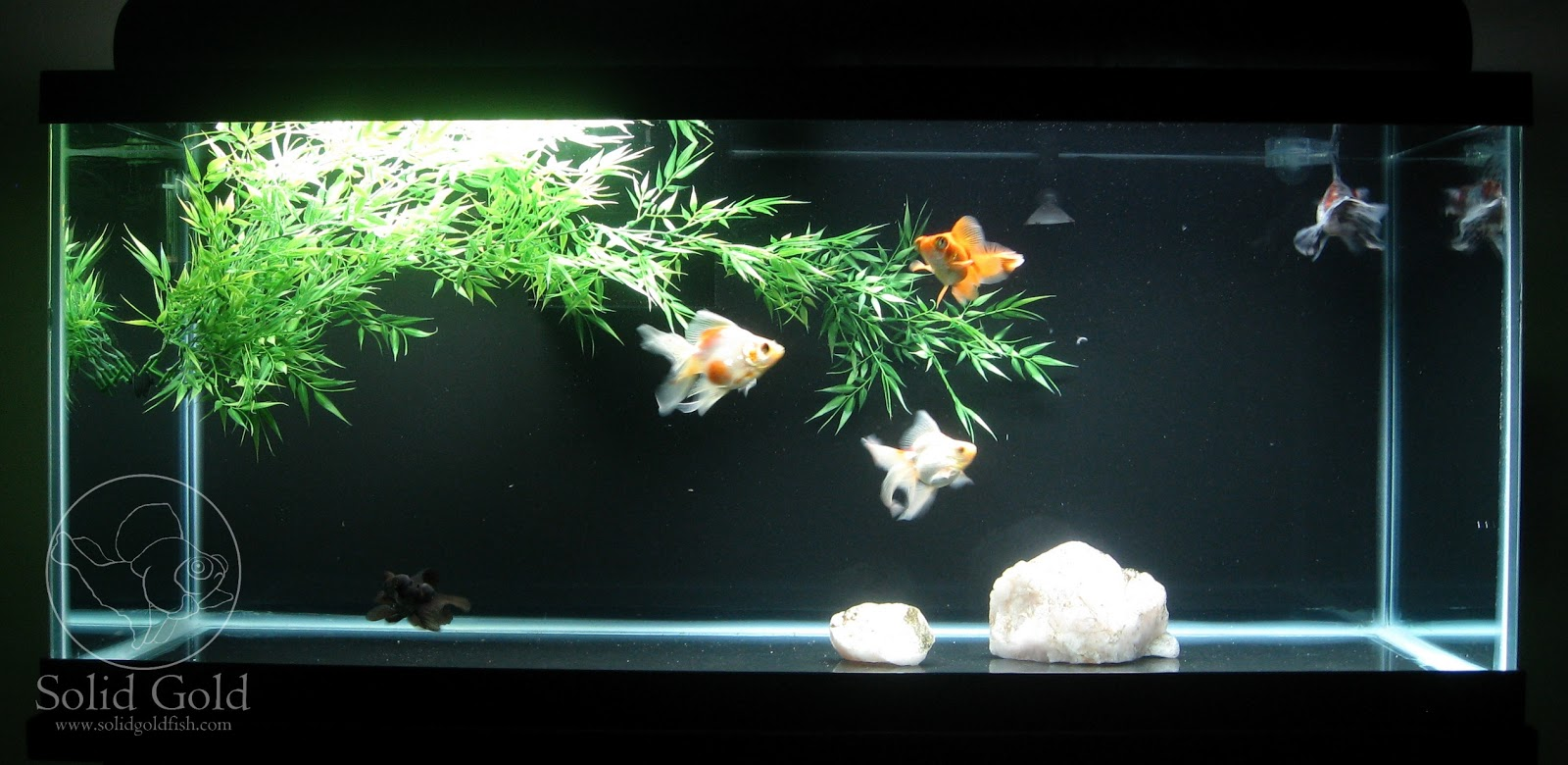 Talk to me about bare bottom tanks aquariums for Aquarium decoration for goldfish