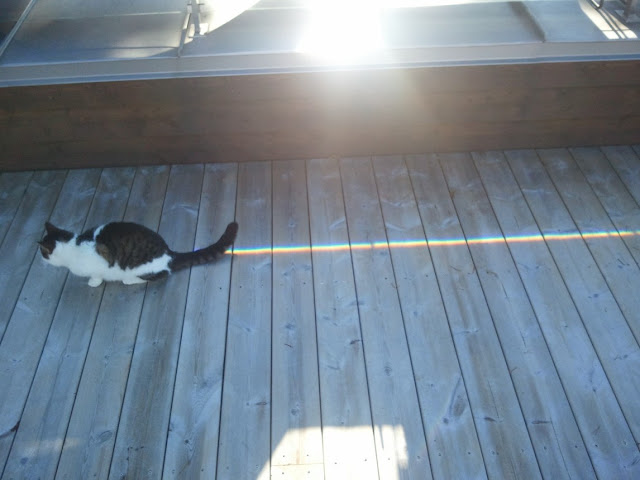 Funny cat pictures part 14, nyan cat
