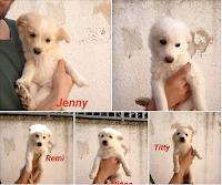cuccioli taglia piccola cani adozione
