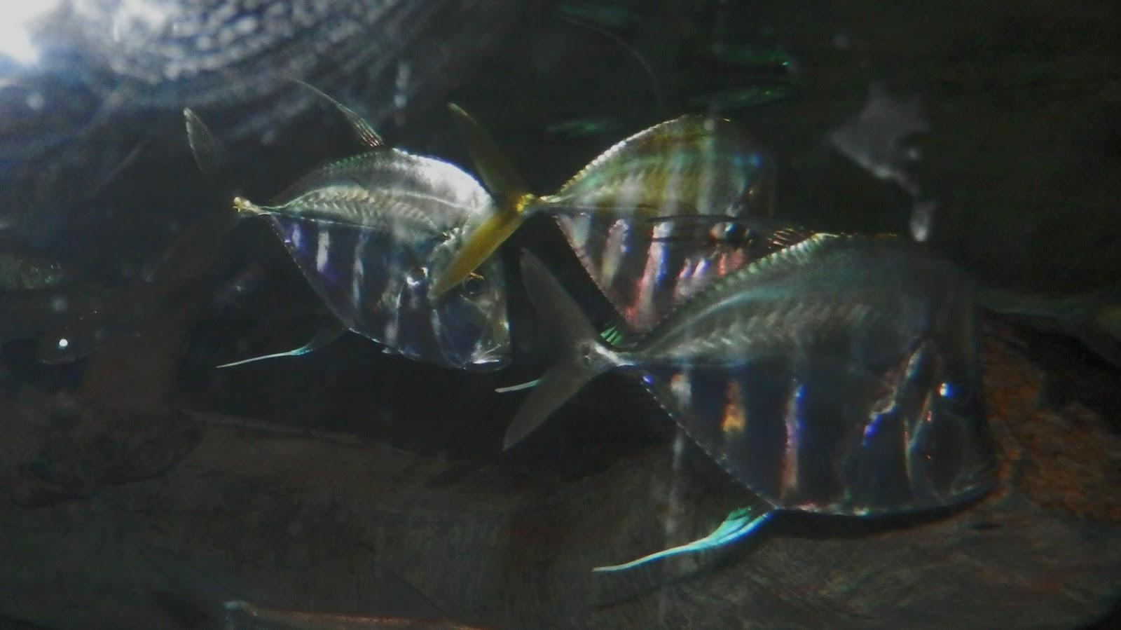 Travel with kevin and ruth the albuquerque aquarium and for Aquarium botanic