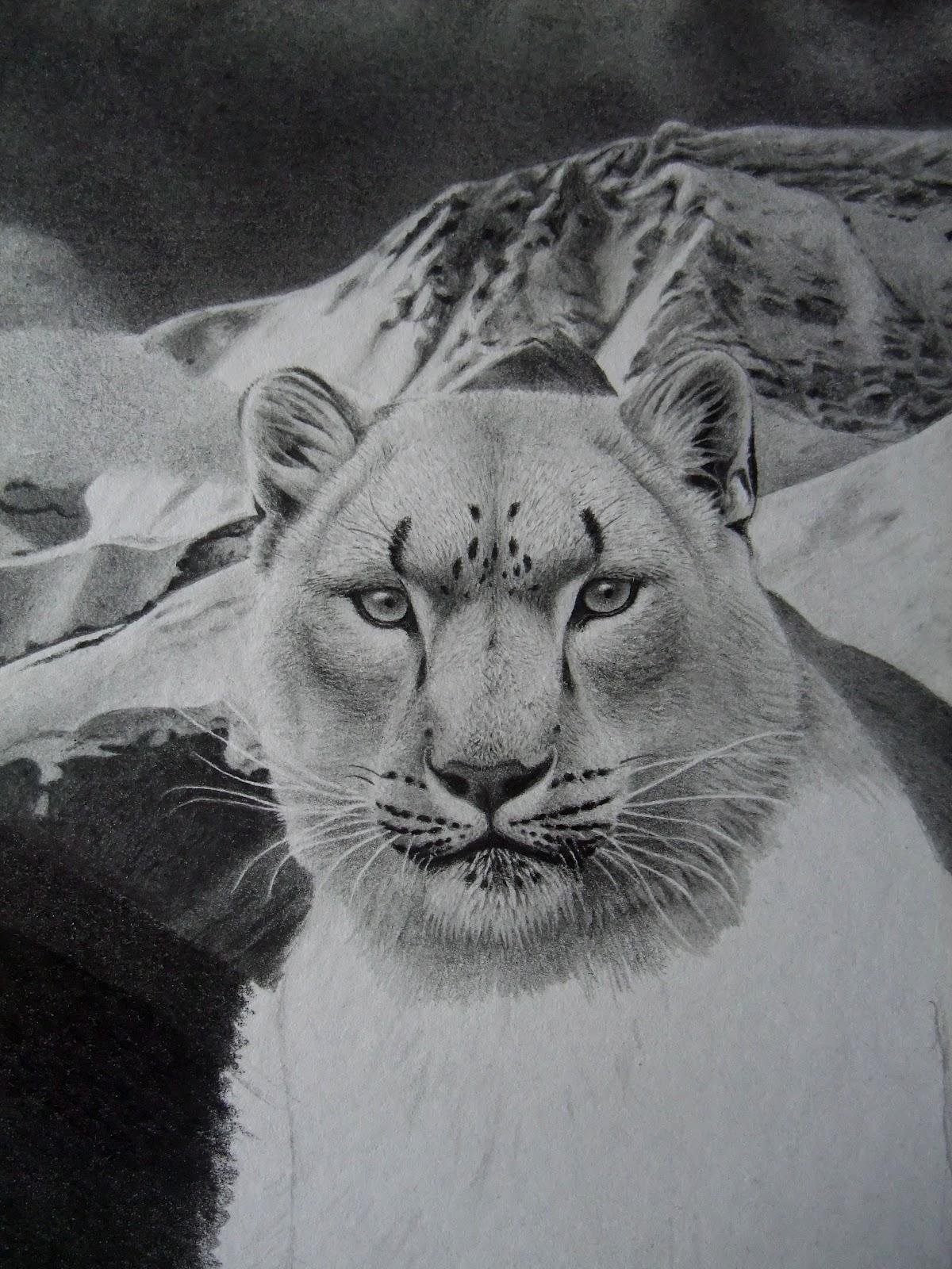 Antoine Roquain Dessin Animalier, Wildlife Pencil Art: Panthère des neiges suite