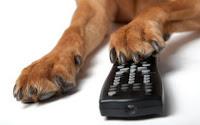 Televisão para cães