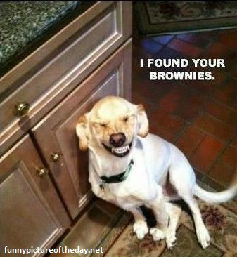I Found Your Brownies Funny Dog Laughing