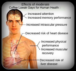 Manfaat kopi luwak untuk kesehatan