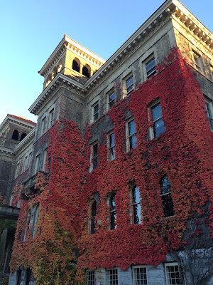 fall leaves and ivy on building