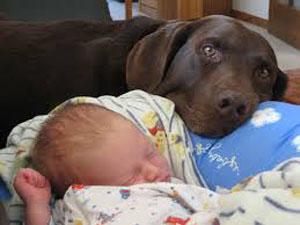 Los perros son como las personas