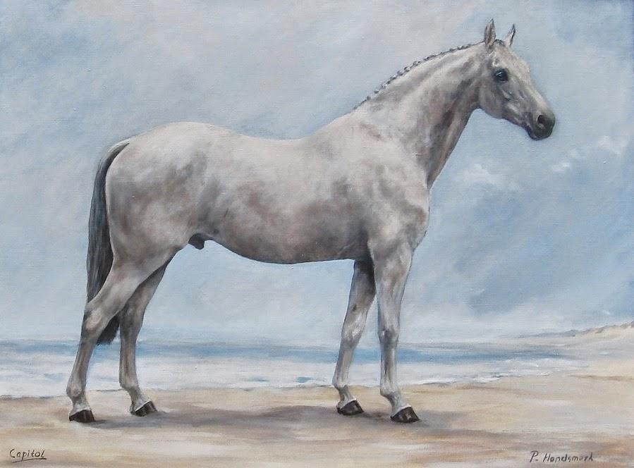 Paardenschilderij,equine art, Paula Hondsmerk Art, horsepainting, horsepainting classic style, stallion Capitol
