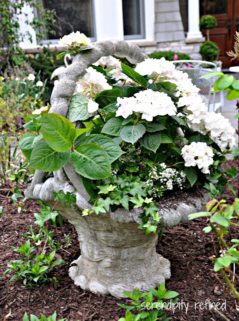 Summer Urn Planter Container Garden Hydrangea Lavender Rose Ivy Grey White Green Pink Purple