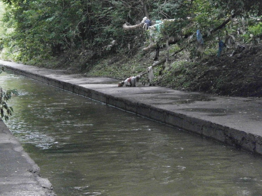 мусор на ветвях на берегу Лыбеди