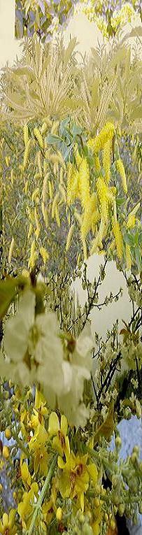 Söğüt Poleni ve Kestane çiçeği