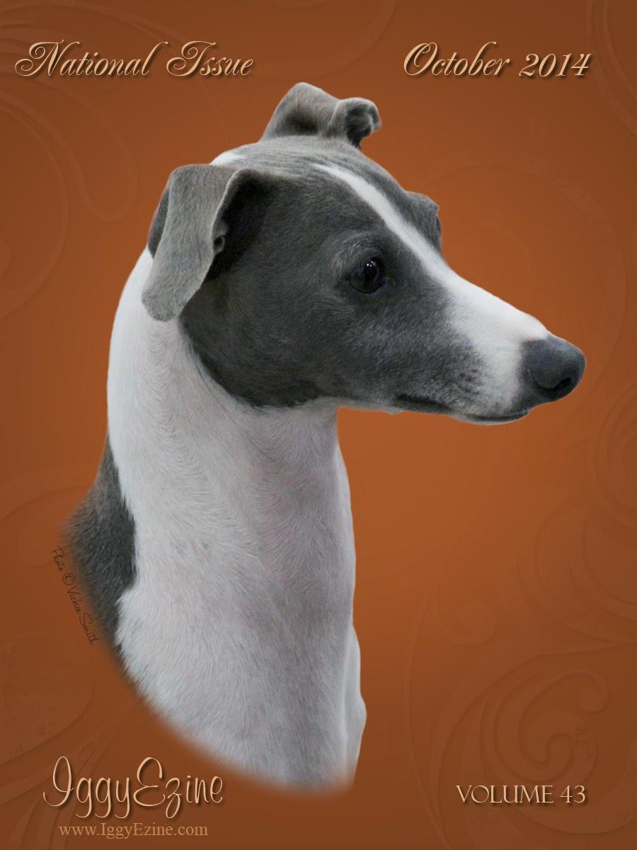 Italian Greyhound Online Magazine