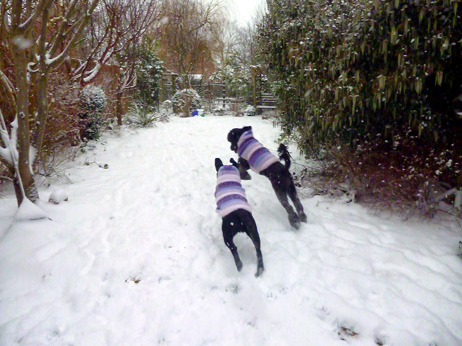 dogs in jumpers playing in the snow