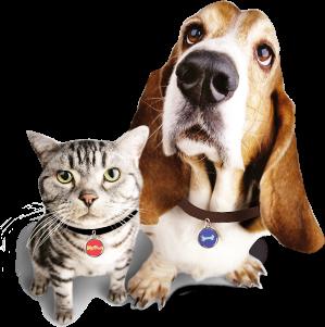 GUIA PRACTICA: En una emergencia NO OLVIDES a tu mascota!