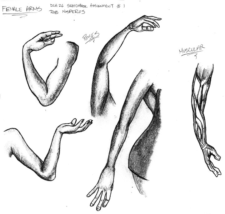 Drawing Arm Lifts : Rob c nisperos art animation has moved life drawing