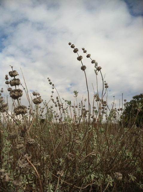 Field Report Friday Conejo Valley Botanic Garden