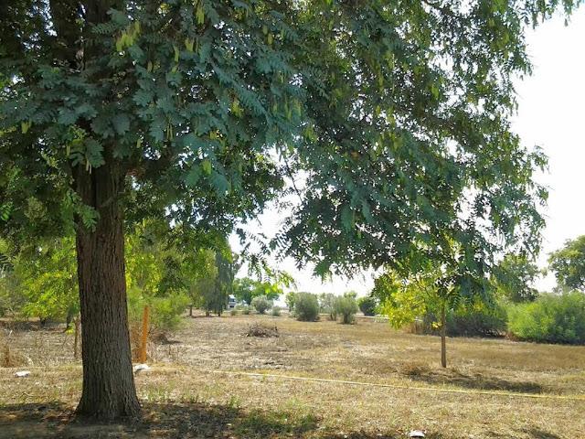 http://lamarchadelcamionero.blogspot.com.es/2009/11/el-lunes-algeciras-jerez-sevilla.html