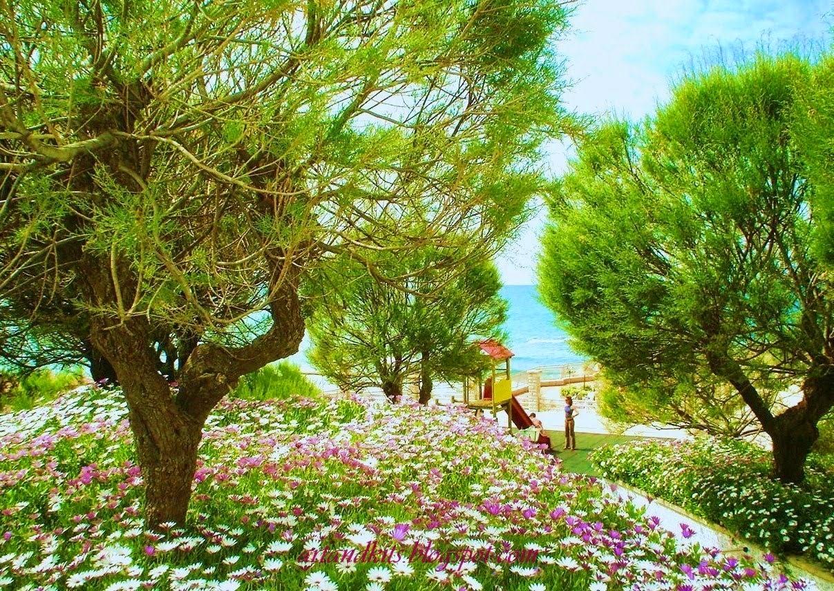 Ter uma consciência tranquila... é conseguir viver em paz consigo mesmo... e isso é um verdadeiro Paraíso... / Having a clear conscience, is to live in peace with oneself... And that is a kind of Paradise...