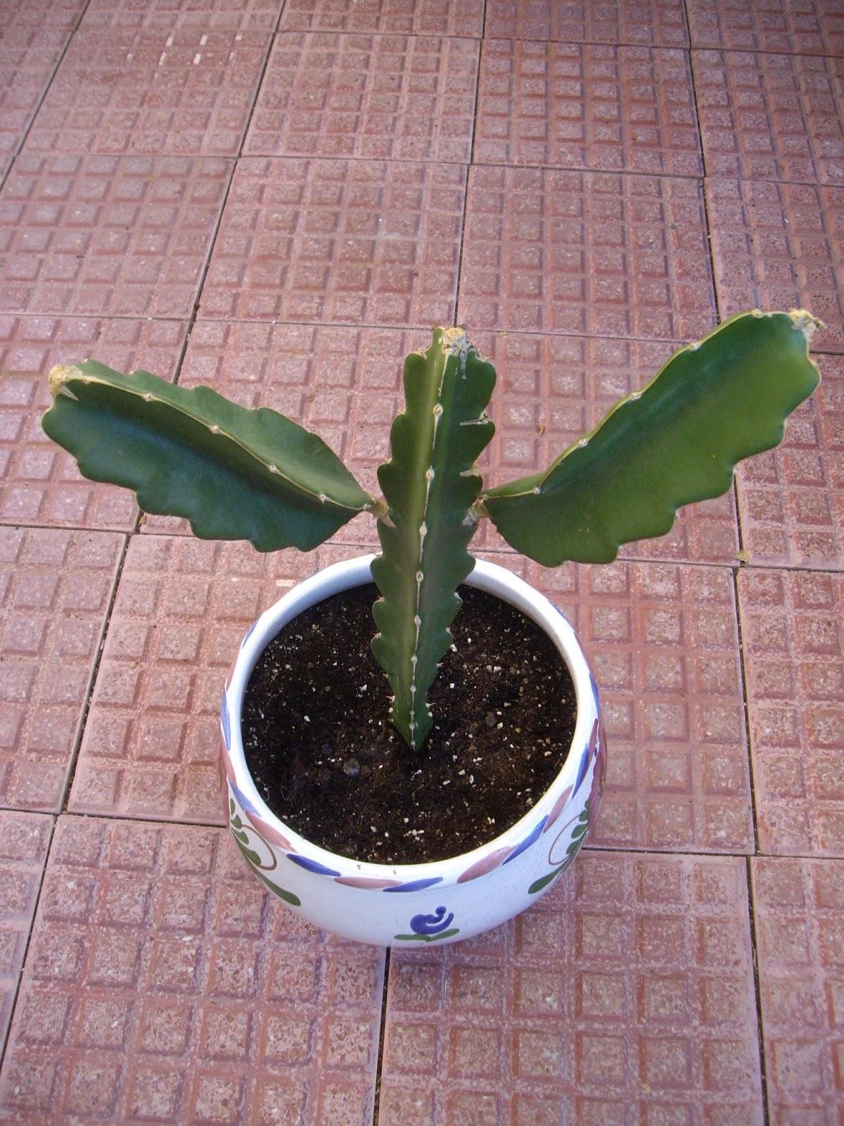 La mar de verde septiembre 2013 for Nombres de cactus