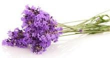 Haftanın çiçeği