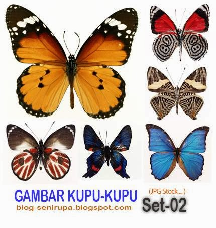 Stock Photo Gambar Kupu Kupu Set 02
