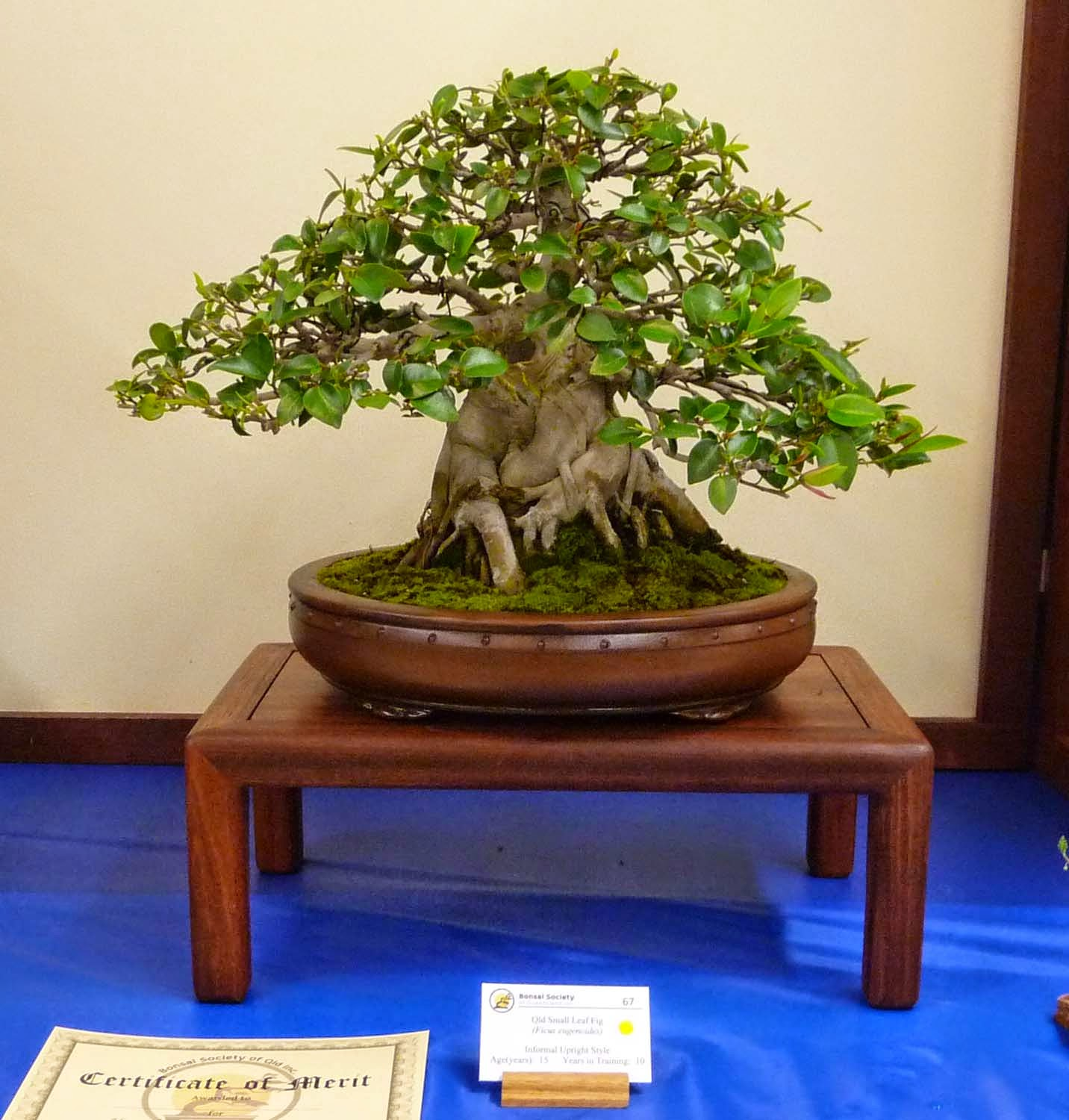 Bonsai Amp Pottery September 2014