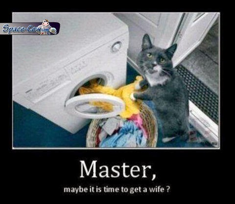 funny cat demotivational picture